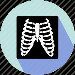 body bones, body structure icon