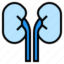 healthcare, kidney, medical, organ icon