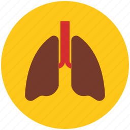 anatomy, body lungs, body organ, breathe, lungs, pulmonology icon