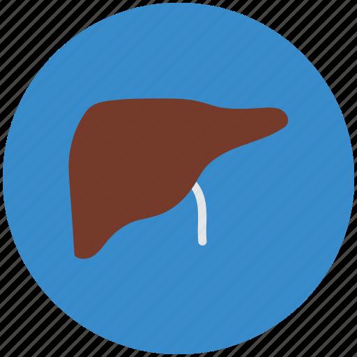 anatomy, gall, human liver, liver, medicine, organ icon