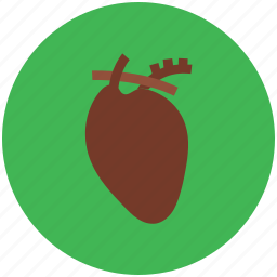 anatomy, cardiology, cardiovascular, healthcare, heart, human body icon