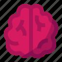 bio, brain, organs, science