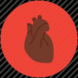 anatomy, cardiology, cardiovascular, healthcare, heart, human body icon