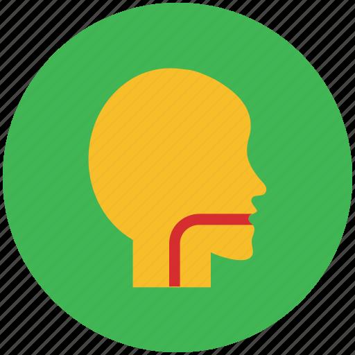 esophagus, infection, sore throat, throat, virus icon