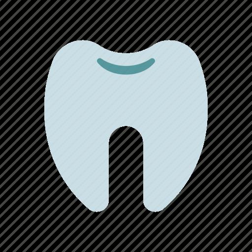 dental, fang, medical, molar, tooth icon