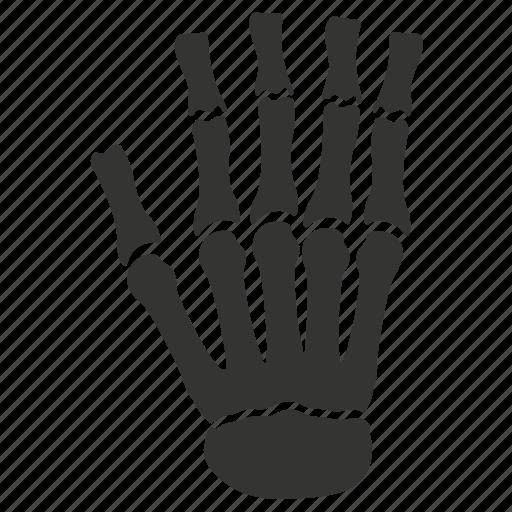 bones, hand, osteology icon