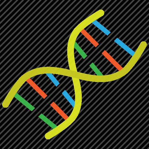 dna, molecule, strand icon