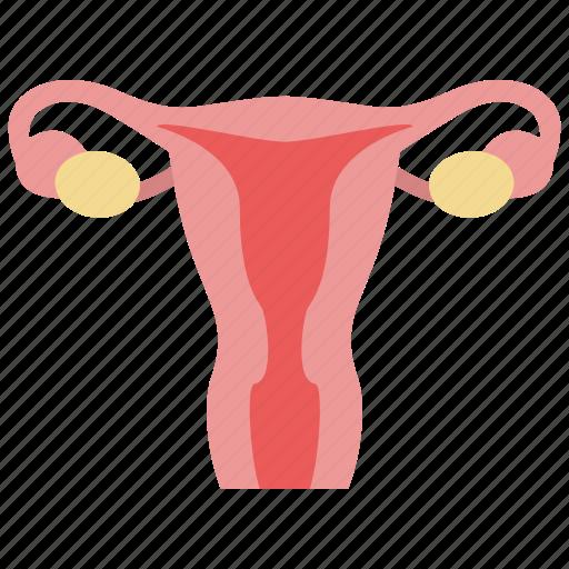gynecology, ovary, uterus icon