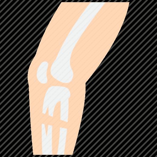 bone, broken, leg, orthopedics icon