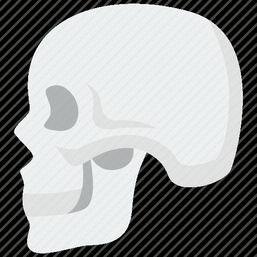 death, halloween, skull icon
