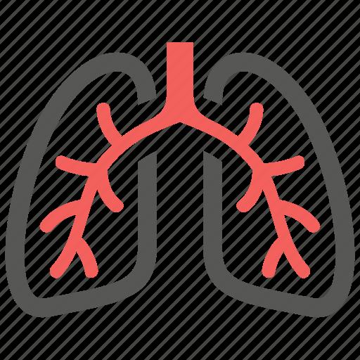 anatomy, breath, lungs, organ, pulmonology icon