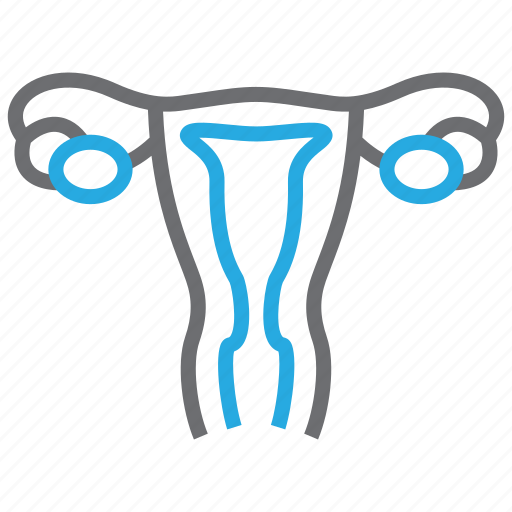 gynecology, ovary, uterus, vagina icon
