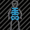 osteology, bone, skeleton, skull