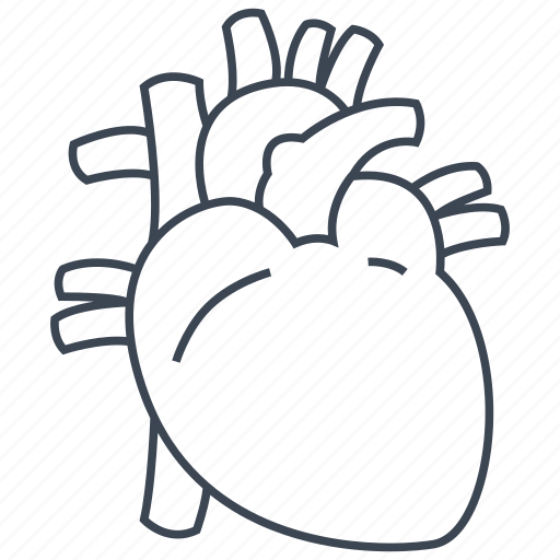 anatomy, cardiology, heart, organ icon