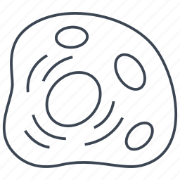 cell, human cell, nucleus icon
