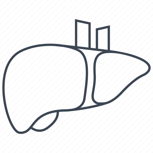 anatomy, hepatology, liver icon