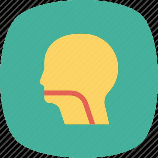 brain, face, head, human, patient, profile icon