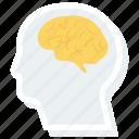 brain, head, human, neurology