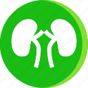 anatomy, body, human, kidney, kidneys, part, parts icon