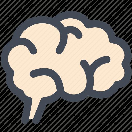 brain, idea, internal organ, medical, mind icon