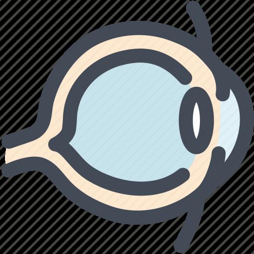 eye, eyeball, human, organ, organs, science, sight icon