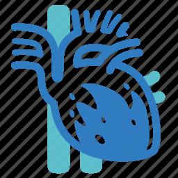 cardiology, cholesterol, dyslipidemia, heart, heart attack, heart disease, stroke icon