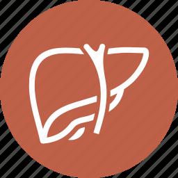 detoxification, hepatology, liver icon