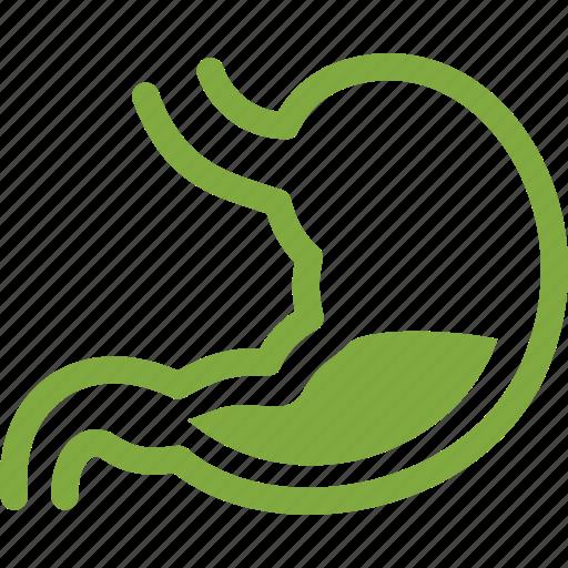 Digestion, gastroenterology, healthcare, stomach icon - Download on Iconfinder