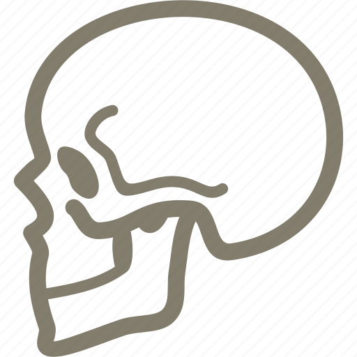 bone, osteology, skeleton, skull icon
