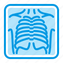 chest, fluorography, medical, xray icon