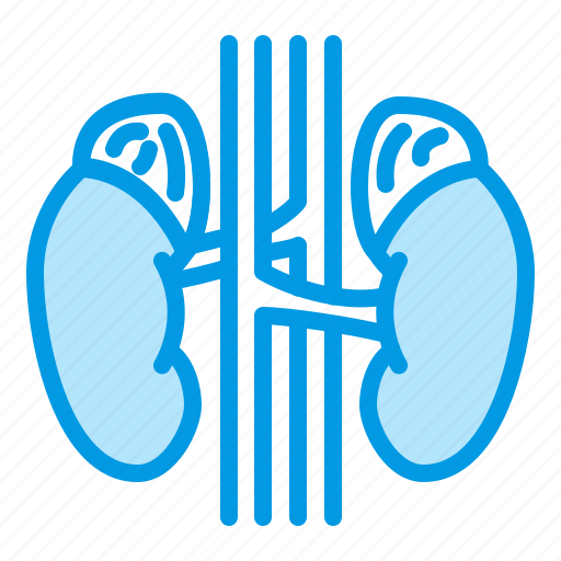 adrenal, glands, kidneys, organ, urology icon