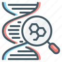dna, genetics, genome, magnifier, research