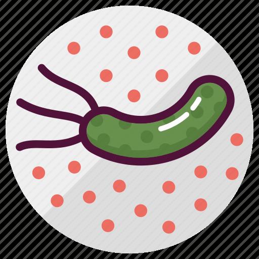 bacteria, bacterium, germs, infection, medicine, microbe, virus icon