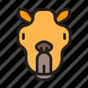 animal, camel, desert, mammals, zoo icon
