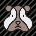 animal, cute, hamster, mammals, pet