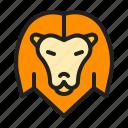 animal, king, lion, mammals, zoo
