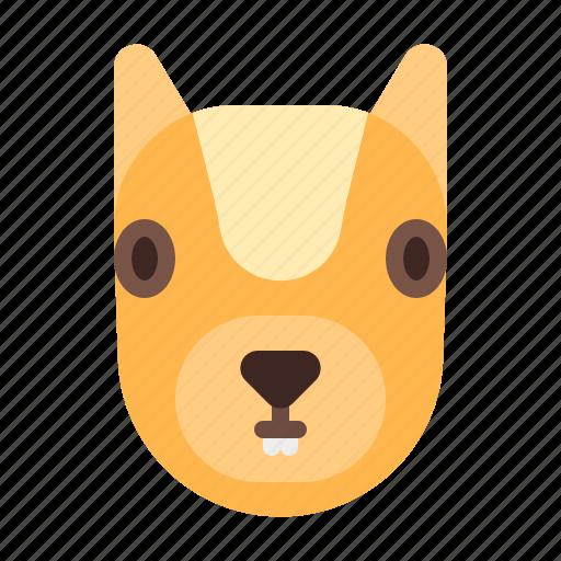Animal, cute, mammals, squirrel icon - Download on Iconfinder