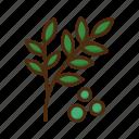 herb, plant, flower, nature, floral