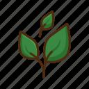 leaves, nature, leaf, garden, plant