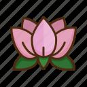 lotus, flower, yoga, floral, blossom
