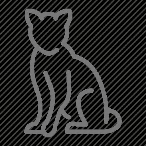 Cat, feline, kitten, kitty, sit icon - Download on Iconfinder