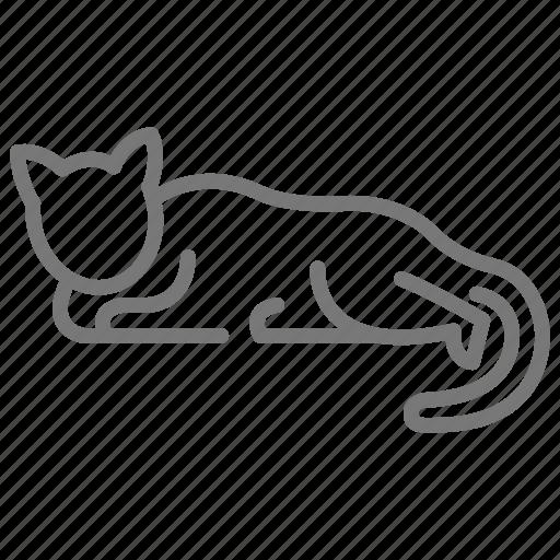 cat, feline, kitten, kitty, lay, pet icon