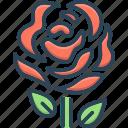 bloom, bouquet, love, petal, red, romantic, rose icon