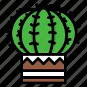 cactus, plant, cute, green, nature, garden