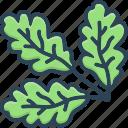 oak, leaf, branch, nature, botany, foliage