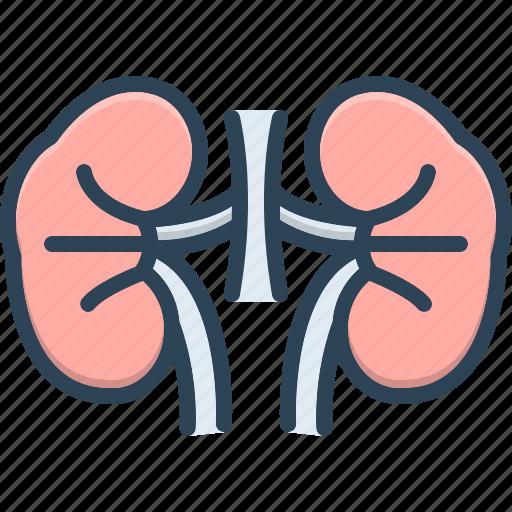 Kidney, renal, anatomy, urology, health, nephrology, disease icon - Download on Iconfinder