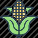 corn, maize, sweetcorn, agriculture, grain, foodstuff, harvest