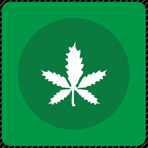 canabis, drug, leaf, plant icon
