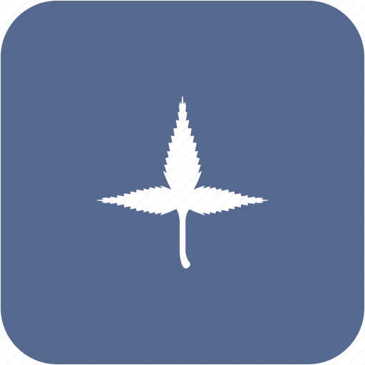 canabis, drug, leaf, medical, plant, treatment icon