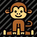 monkey, animal, mammal, wildlife, primate